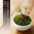 ミニ盆栽 まつぼっくり 盆栽(bonsai ボンサイ) 翠松園 撰*bonsai_002*