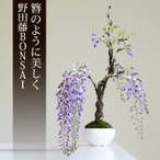 somurie_bonsai-004