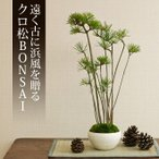 ミニ盆栽 クロ松 盆栽(bonsai ボンサイ) 翠松園 撰*bonsai_009*