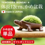somurie_bonsai-030