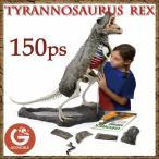 ジオワールド社 恐竜フィギュア GEOREX ジオレックス 組み立て ティラノサウルス骨格模型