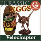 ジオワールド社 恐竜フィギュア ジュラシックエッグ 恐竜組み立てキット ベロキラプトル