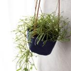[吊るす植物]ホヤ・レツーサ(希少種)