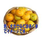 送料無料 長崎県産:極早生みかん 約5kg サイズ(S・M・L)混合