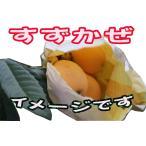 ご家庭用 涼風(すずかぜ) 長崎県産びわ(露地栽培) 大玉 Lサイズ〜(小ぶりのものが混在) 5袋(約15玉)/箱