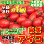 ショッピングトマト 完熟ミニトマト アイコ 愛知県産 1kg 送料無料 糖度9度も 究極の糖度と美味しさ トマトの常識覆す