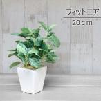 人工観葉植物 ミニポットフィットニア 20cm