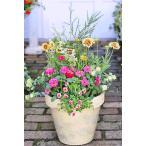 花寄せ植え おしゃれ ガイラルディア&メラレウカ&ジニア・ダブル ナチュラルテラコッタクリームイエロー 誕生日プレゼント 記念日 贈り物