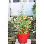 花寄せ植え おしゃれ ガザニア・クリムゾンフラッシュ&ガイラルディア&カリブラコア ナチュラルテラコッタRED 誕生日プレゼント 記念日 贈り物