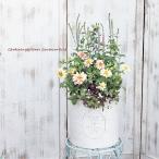 花寄せ植え ベロニカ&ジニア&オレガノ ナチュラルアンティーク調樹脂ポット 誕生日祝いプレゼント