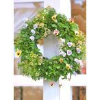 花寄せ植え おしゃれ ビオラ&アリッサム&ブラキカム ナチュラルリース 誕生日プレゼント 開店祝い ギフト