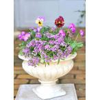 花寄せ植え おしゃれ フリルパンジー&栄養系アリッサム アンティーク調クラッシックカップ型陶器鉢 誕生日プレゼント 開店祝い