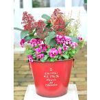 花寄せ植え おしゃれ スキミア&パンジー&エリカ アンティーク調ジャンクブリキred 誕生日プレゼント 開店祝い