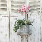ミニ胡蝶蘭&観葉植物ギャザリング フィロデンドロン&ホヤ アンティーク調陶器ポットgray 開業祝い インテリアグリーン