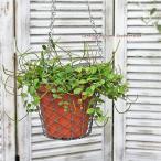 観葉植物 ペペロミア・アングラータ 吊りワイヤーバスケットテラコッタ 新築お祝い インテリアグリーン