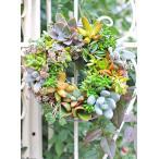 多肉植物たっぷり寄せ植えおしゃれリース Sサイズ 20cm 誕生日祝い 新築祝い プレゼント ギフト