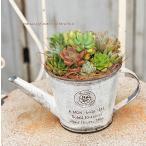 多肉植物寄せ植えアソート ジョウロ型ブリキポットwhite 誕生日祝い 新築祝い プレゼント