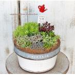 セダム&多肉植物寄せ植え ナチュラルジャンクブリキサークルポット  誕生日祝い 新築祝い プレゼント