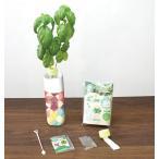 ペットボトル水耕栽培キット ※100個以上にてご注文をお願いします。/販促品 ノベルティ 景品 粗品