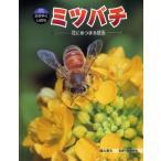 ミツバチ 花にあつまる昆虫