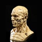 ノーブランド品 樹脂製 4インチ 人間 モデル 解剖学 スカル ヘッド 筋肉 骨 医療 描画 アンティーク