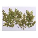 Fityle 全3種選べ 10個入り ジュエリー作り カード作成 携帯ケース 乾燥花 標本式 乾燥植物  - 緑葉, 2.3-5 cm