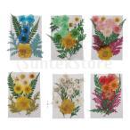 ドライフラワー ドライ葉 乾燥フラワー 押し花 スクラップブック 用品 DIY 工芸品 材料 全6カラー