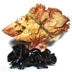彫刻置物 寿山石 海魚(台付) No.01 天然石 パワーストーン※DM便・ネコポス不可※