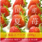 良食味の新しい夏秋イチゴ(秋田県産なつあかり) 2パック 600g (3L-S)