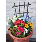送料無料 鉢花 季節の寄せ植えB254