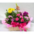 季節の寄せ鉢・ギフトセット 453 鉢花