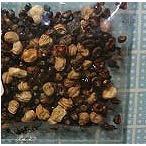 サボテン種子ミックス(ロシア産)