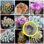 エスコバリア属(Escobaria)種子ミックス
