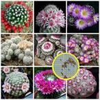 マミラリア属(Mammillaria)種子ミックス