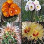 南アフリカ産サボテン種子100粒のバラエティパック No.3