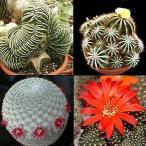 南アフリカ産サボテン種子100粒のバラエティパック No.4