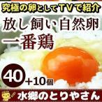 鶏卵 放し飼い自然卵 一番鶏 50個詰 (40個+破損保障分10個) 安心卵 / 冷蔵 限定配送
