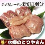 名古屋コーチン 新鮮 もも肉2枚 胸肉2枚 ささみ2本 ギフト