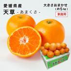 愛媛県産 天草 あまくさ 家庭用 訳あり 大きさおまかせ 5kg 紅まどんなの親品種 みかん フルーツ