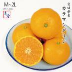 カラマンダリン 愛媛県産 JAえひめ中央 青秀品 M〜2L 1.5kg 4月中旬より発送 母の日ギフト