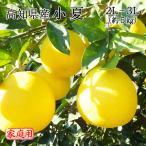 送料無料 みかん フルーツ 訳あり 高知県産 小夏 家庭用 2L〜3Lサイズ 5kg ニューサマーオレンジ 日向夏