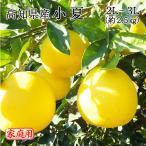 送料無料 みかん フルーツ 訳あり 高知県産 小夏 家庭用 2L〜3Lサイズ 2.5kg ニューサマーオレンジ 日向夏