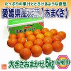 送料無料 みかん フルーツ 愛媛県産 天草 あまくさ 家庭用 訳あり 大きさおまかせ 5kg 紅まどんなの親品種