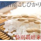 魚沼産コシヒカリ 特別栽培米 白米10k 「新米」