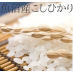 魚沼産コシヒカリ 1等米 白米10k 「新米」