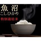 魚沼産コシヒカリ 「特別栽培米」白米10k 【新米】