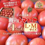 親バカトマト約4kg LMサイズ 20個〜24個入り いわき市産 ギフト 産地直送