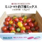 親バカトマトのミニトマト約7種ミックス 1.2kg いわき市産
