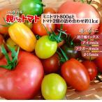 [予約]親バカトマトとミニトマトの詰め合わせ 約1kg  いわき市産 選べるミニ 11月下旬〜発送