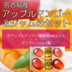 (11)予約販売 アップルマンゴー(�